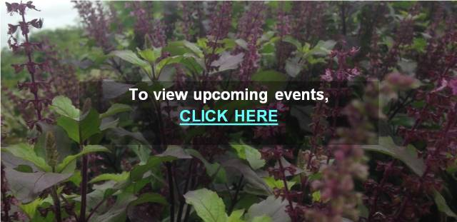 Image of plants--Link to Current Events