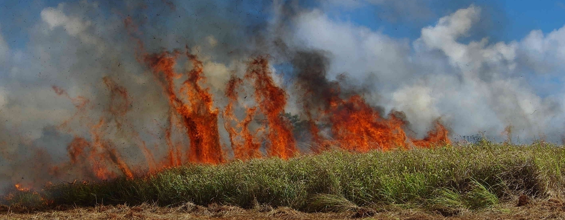 Wild fire, grasses in flames
