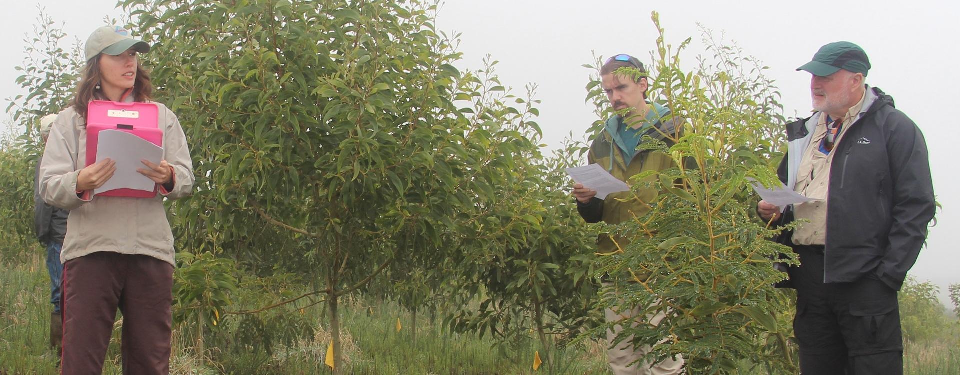 Koa seed orchard