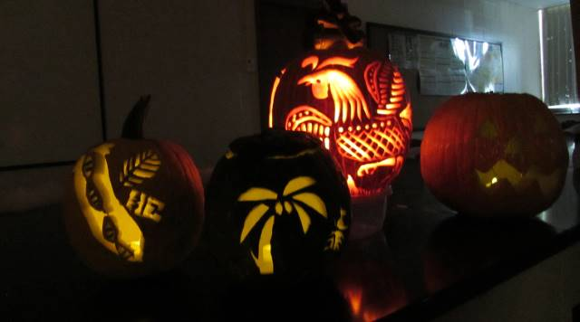 Four lit jack-o-lanterns