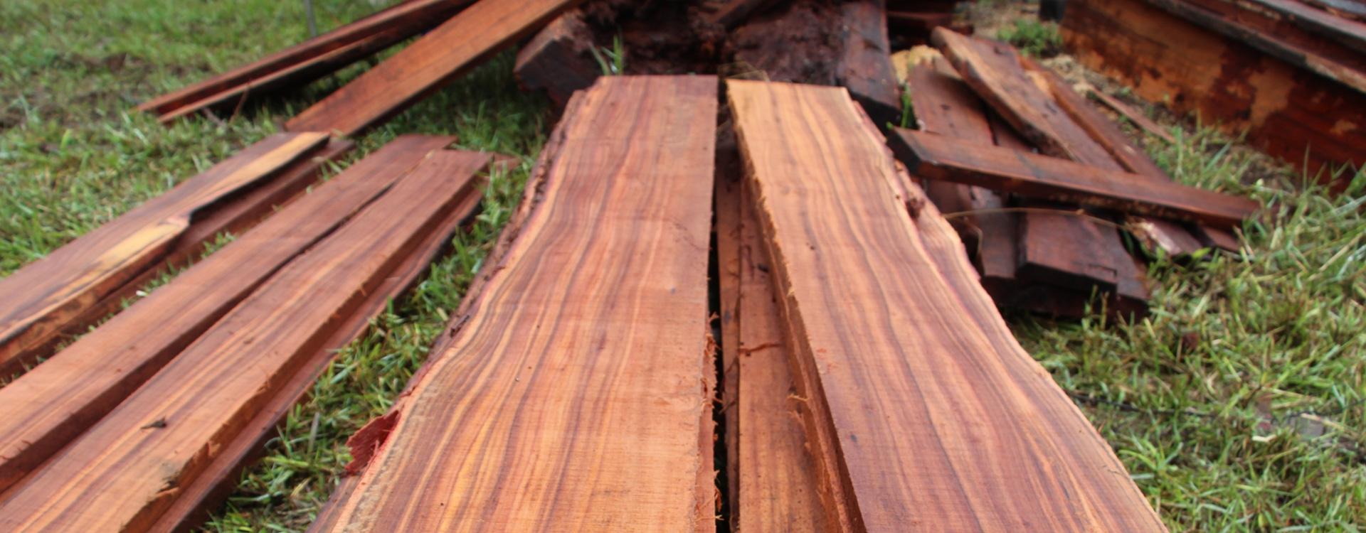 Koa Timber