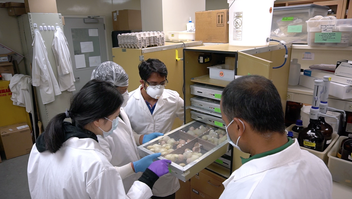 Dr. Jha and students studying chicks