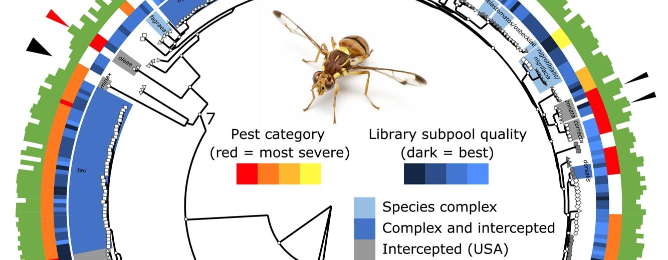 Fruit Fly Evolution