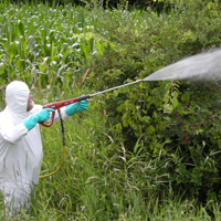 Spraying right of way.