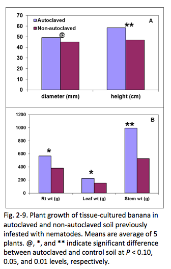 Fig. 2-9. Plant growth of tissue-cultured banana in autoclaved and non-autoclaved soil previously infested with nematodes. Means are average of 5 plants. @, *, and ** indicate significant difference between autoclaved and control soil at P < 0.10, 0.05, and 0.01 levels, respectively.