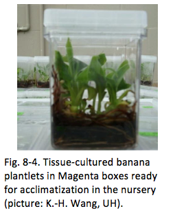 Chapter VIII | Tissue Culture of Banana