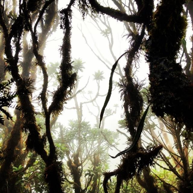 Forest on Mt Kaala