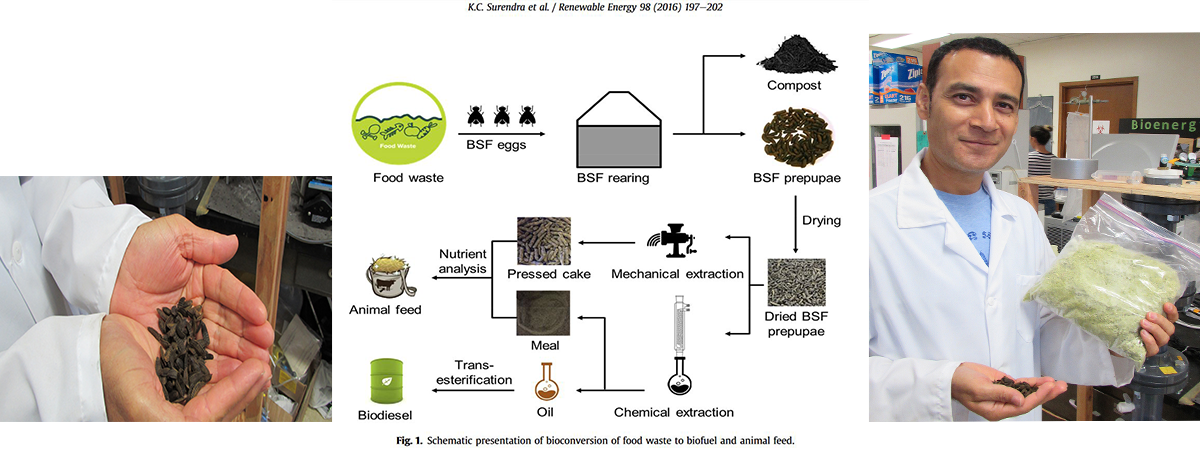 Biofuel and Animal Feed