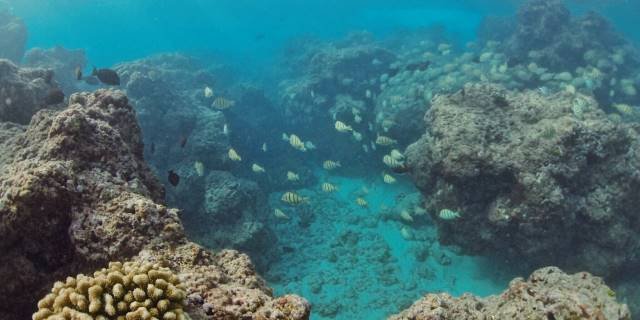 reef fish swimming