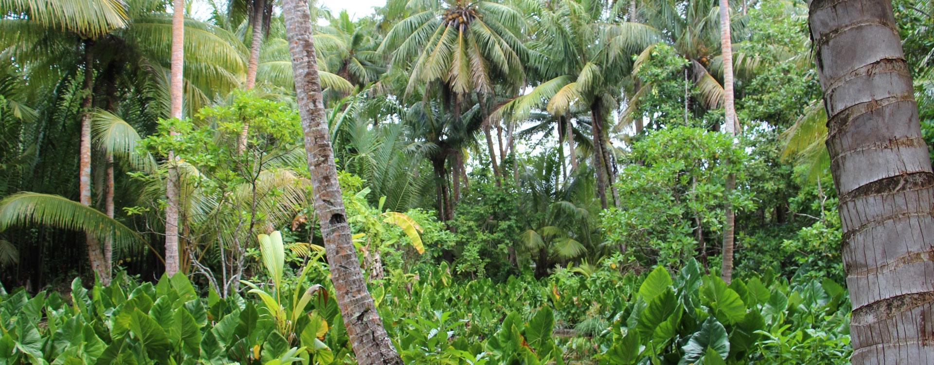Coastal Agroforest