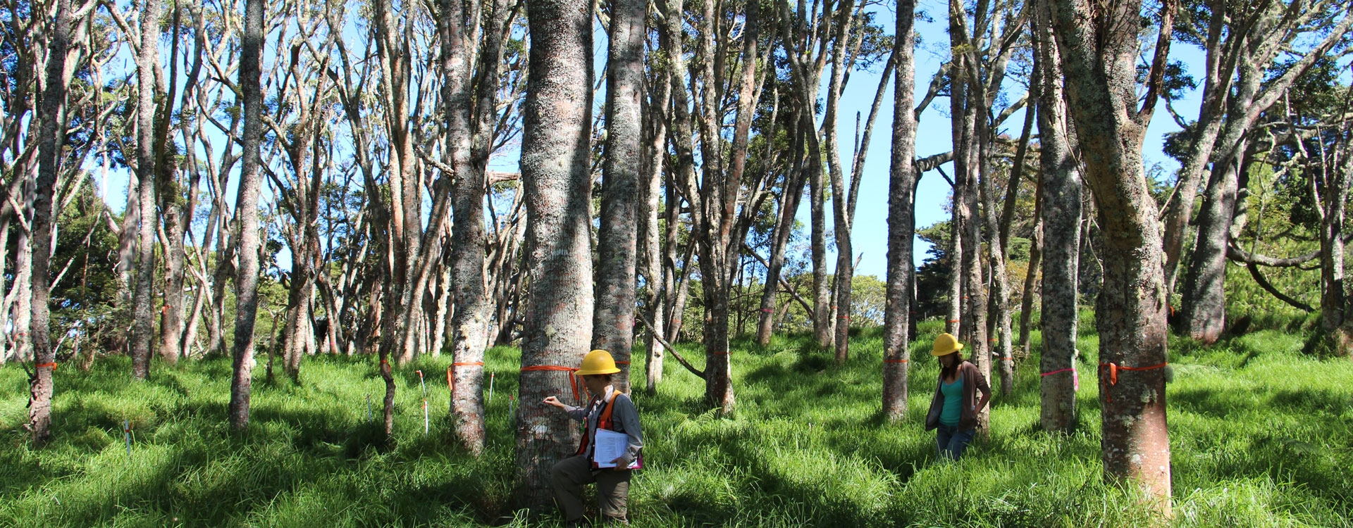 Koa Plantation