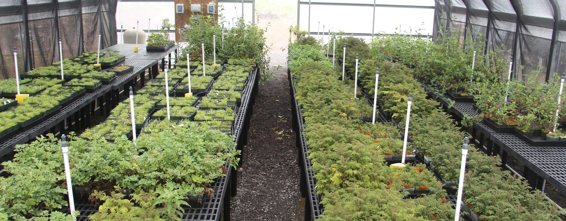 The rare plant nursery