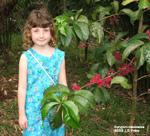 Syzygium malaccense, mountain apple flower