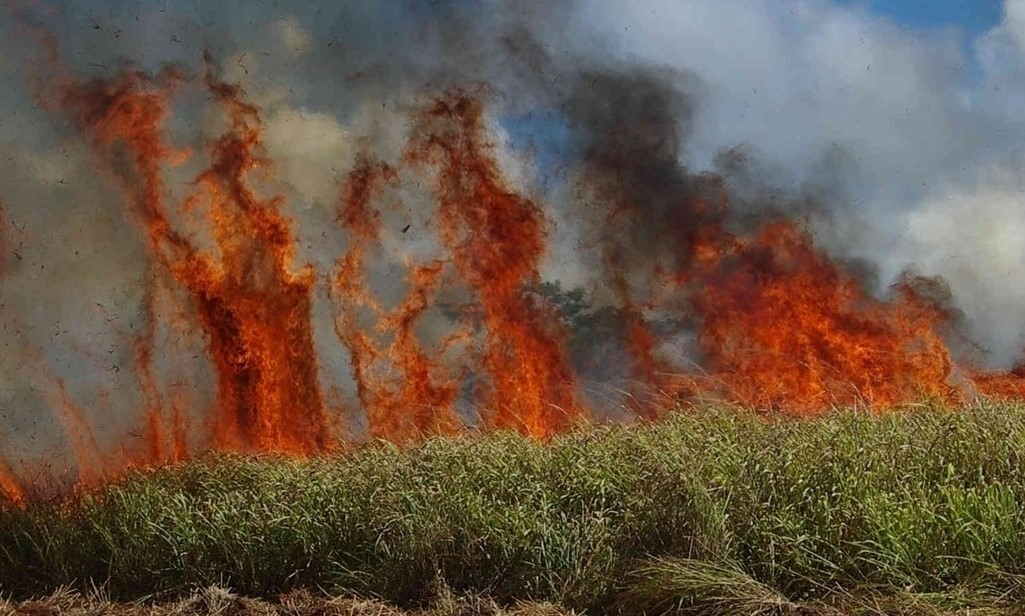 Wild fire in sugar cane field