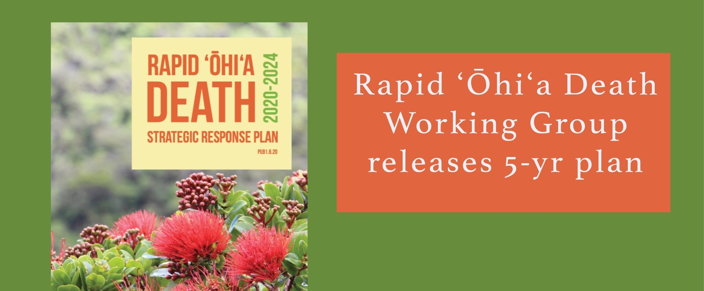 The Rapid Ohia Death Working Group, led by the Department of Land & Natural Resources, Division of Forestry and Wildlife among others, has released its second strategic response plan covering work to address ROD from 2020 to 2024.
