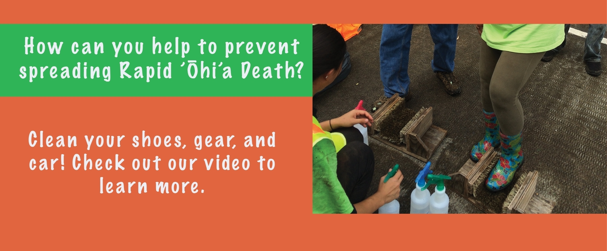 1. Brush/Scrape all dirt or mud off shoes. 2. Spray to coat the bottom of your shoes with 70% rubbing alcohol. Prevent spreading Rapid Ohia Death by following these simple steps before and after visiting forests. Click here to watch a quick video on sanitation.