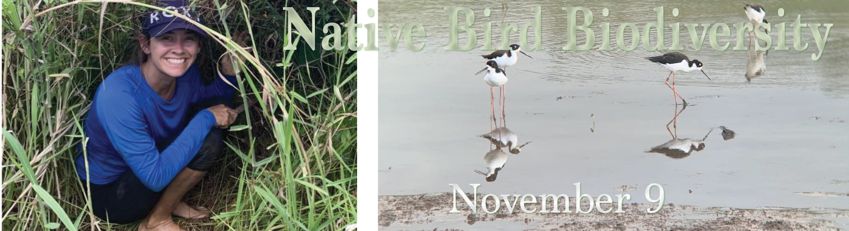 Native Bird Biodiversity, Nov 9