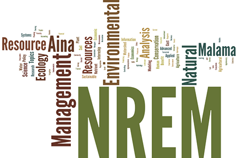 image of nrem related words